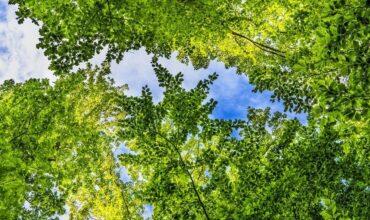 Scopri la Food-Forest a Bagno di Romagna