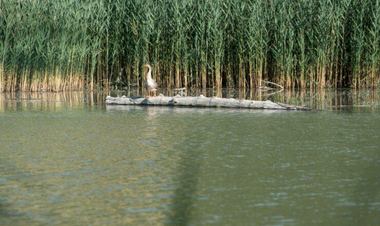 Lago di Quarto